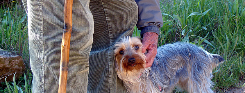man with cane bending down to pet yorkie - staying active - mobility aids