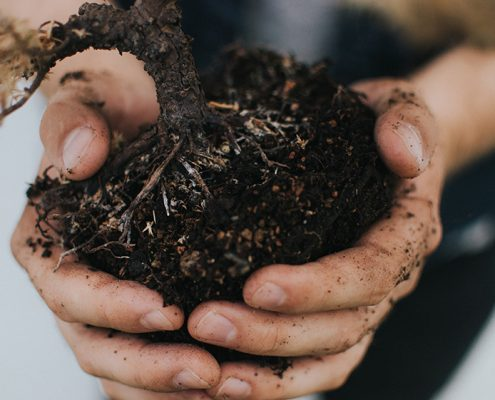 Person holding small tree with dirt on their hands